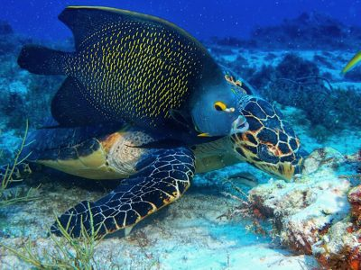 Angel Fish y turtle Joanna