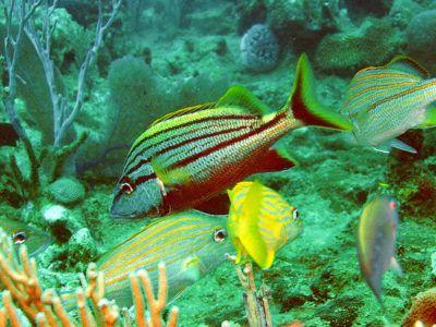 sitios de snorkel bayahibe
