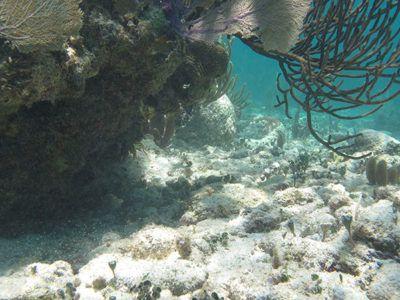 hacer snorkel en bayahibe