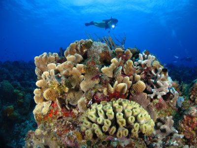Best Caribbean Coral Reefs - Cozumel