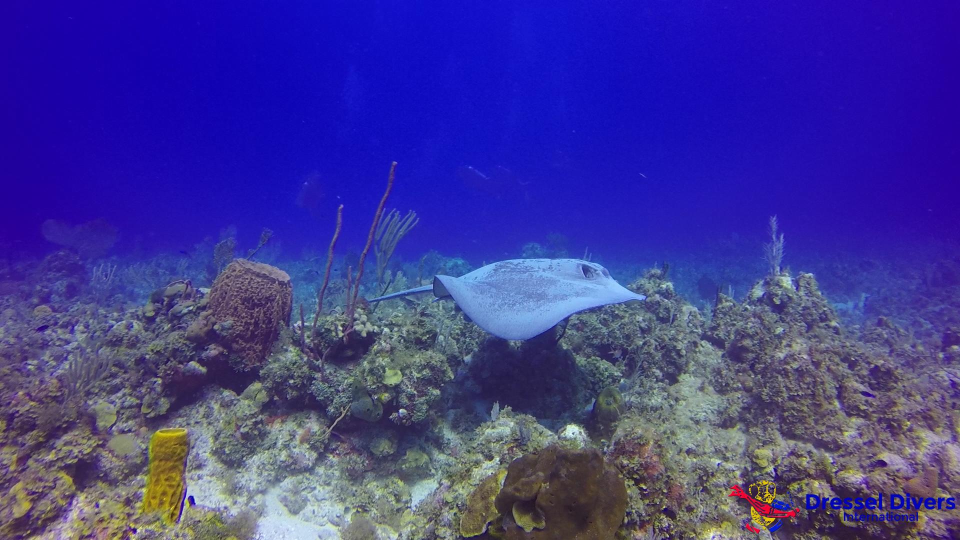 Best Caribbean Coral Reefs Jamaica-arrecifes de coral del Caribe