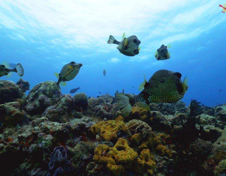 Los mejores arrecifes de Coral del Caribe