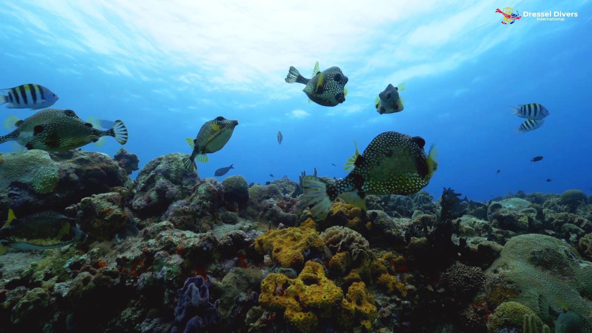 Arrecifes De Coral Del Caribe Cuáles Son Los Mejores Para Bucear