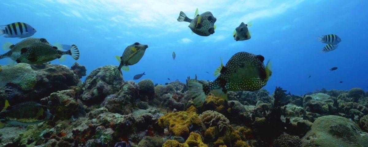 Best Caribbean Coral Reefs Playa Del Carmen