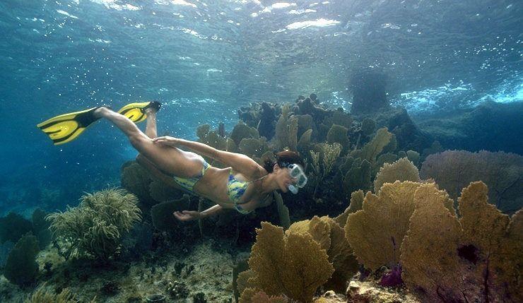 Best tours in Jamaica - Montego Bay Marine Park