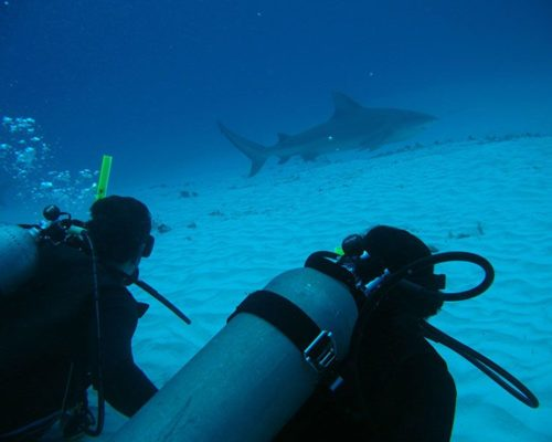 bull shark mexico