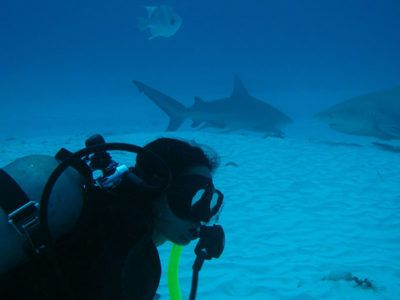 Bull-Shark-Diving-Excursion-Dressel-Divers-6