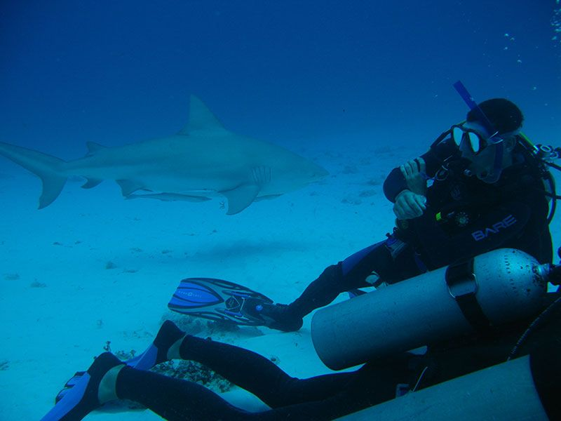 BULL SHARK Diving Excursion & Tour with Dressel Divers