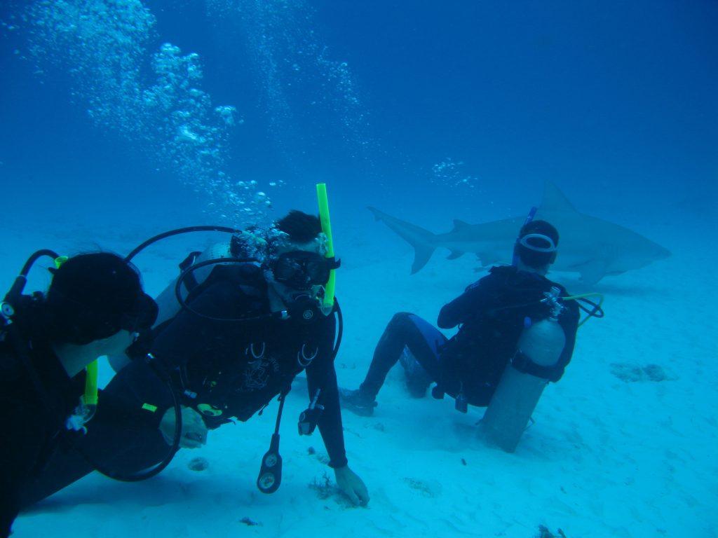 Diving with bull sharks in the Playa del Carmen (Caribbean)
