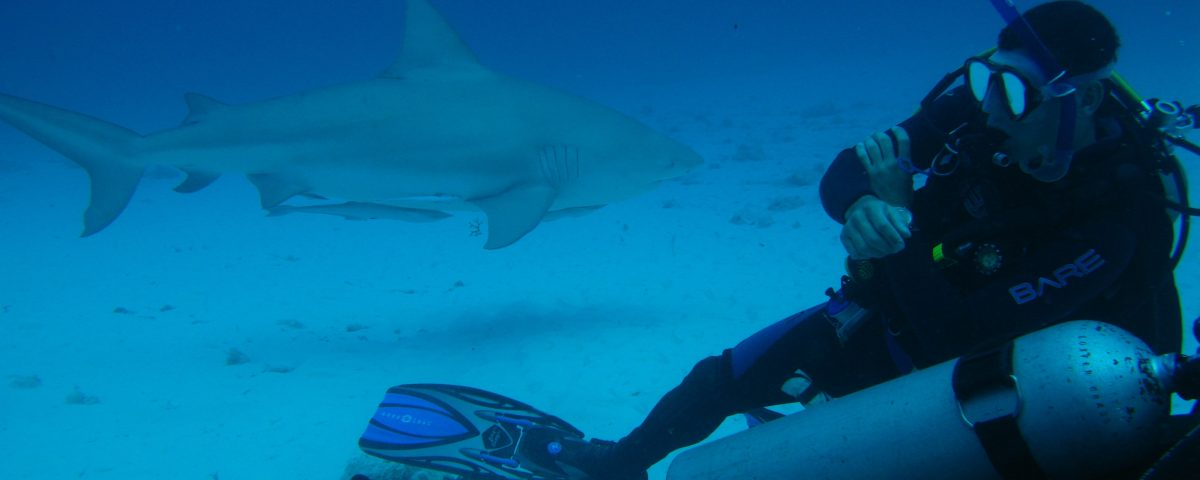 Diving with bull sharks in Playa del Carmen