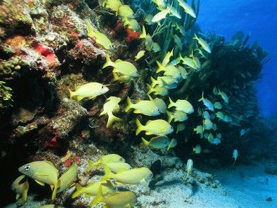 dive centers cancun
