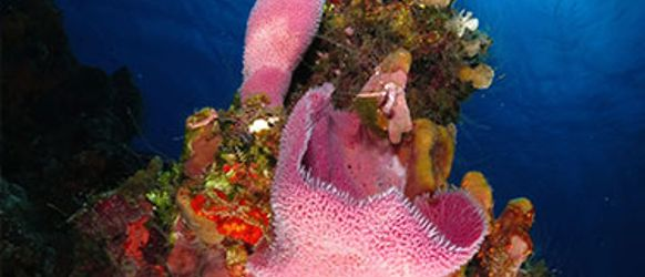 cancun_scuba_divingrecor