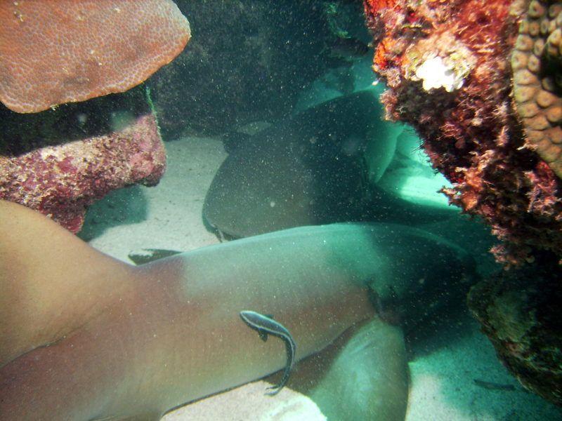 Caribbean Adventures in Jamaica - Montego Bay Marine Park
