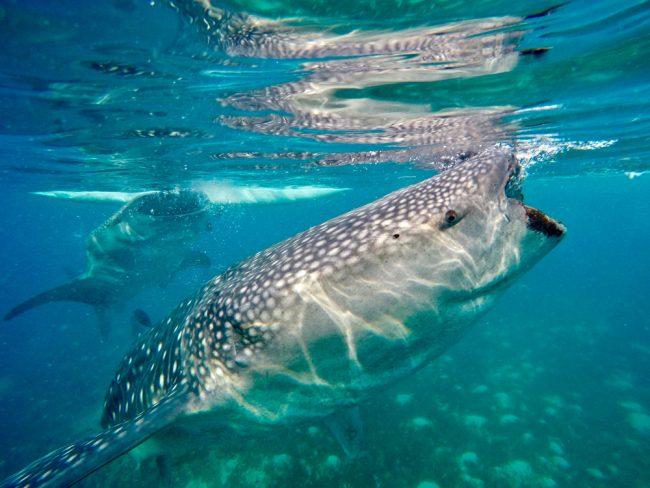 Caribbean Scuba Diving - Bucear en el Caribe - 2