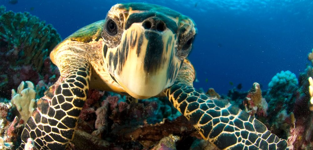 Caribbean Scuba Diving - Bucear en el Caribe -principal