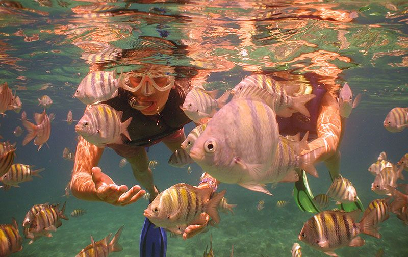 Caribbean Snorkeling Excursion DD Tour