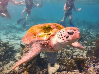 Caribbean Snorkeling Mexico