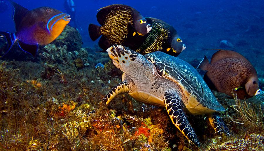 Cozumel Marine Park History - main picture