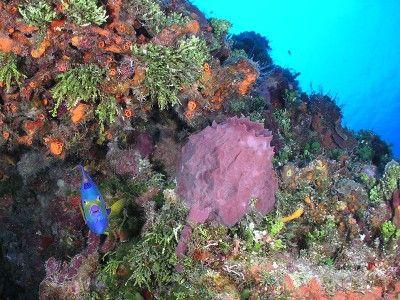 dive centers cozumel