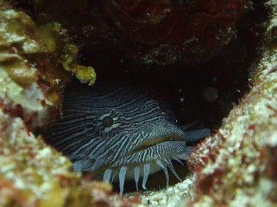 immersioni subacquee Cozumel