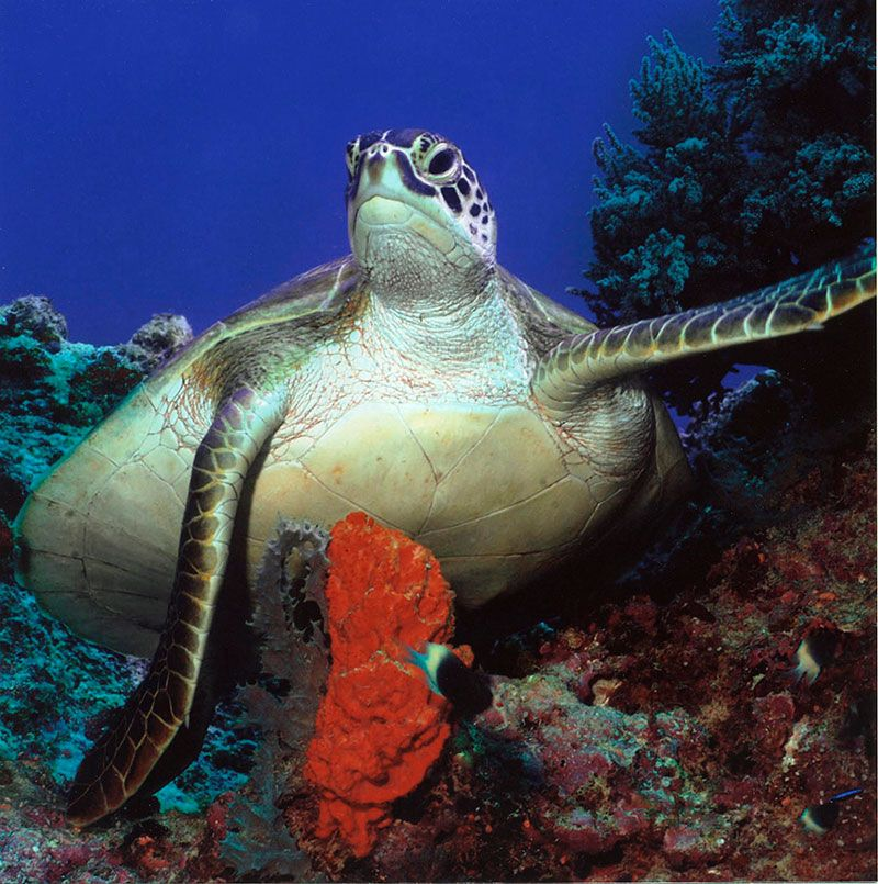 Scuba diving in cozumel with dressel divers - Cozumel dive sites ...