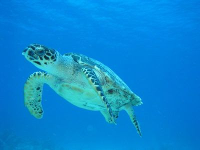 centros de snorkel cozumel
