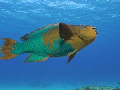 sitios de snorkel cozumel