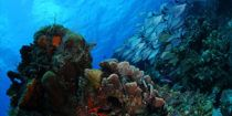 Cozumel_Diving_Excursion