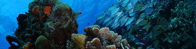 Cozumel Diving Excursion