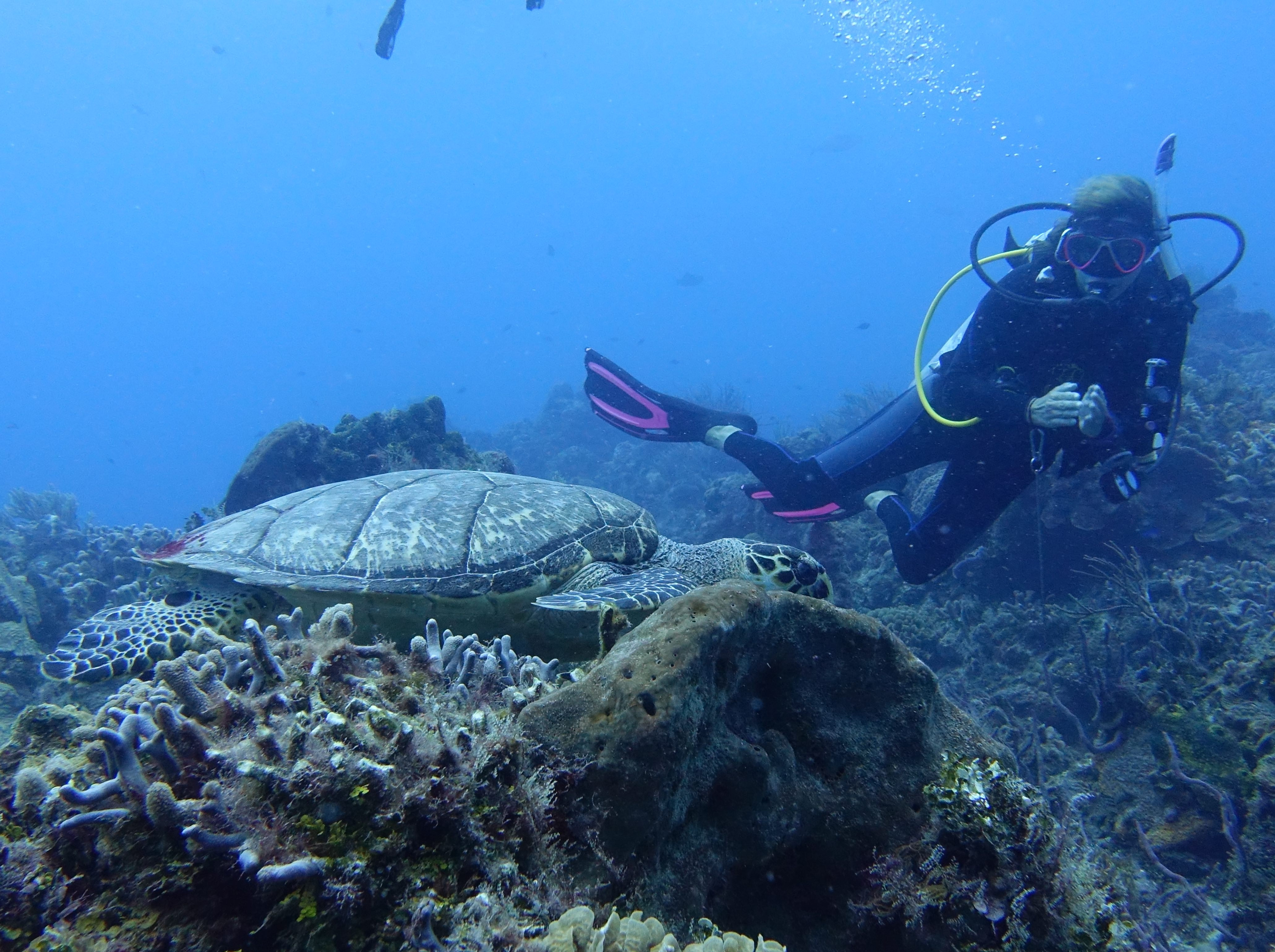 Difference between snorkeling and scuba diving - turtle 2