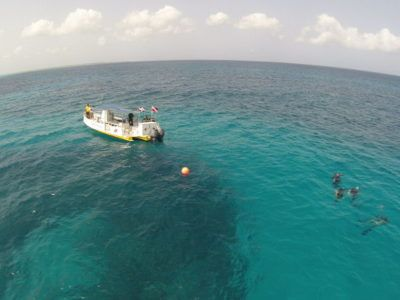 excursion divers day