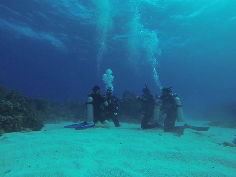 Dressel Divers Courses