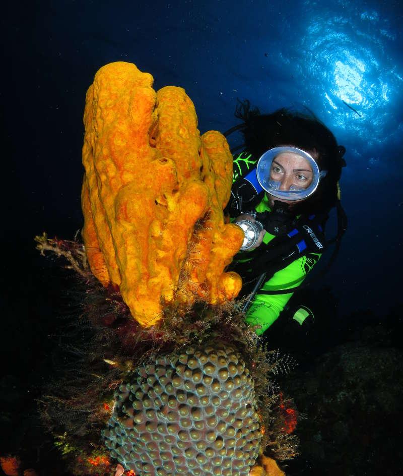 Dressel Divers Scuba Diving