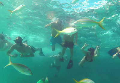 Catamaran Tour In Punta Cana - school of fish