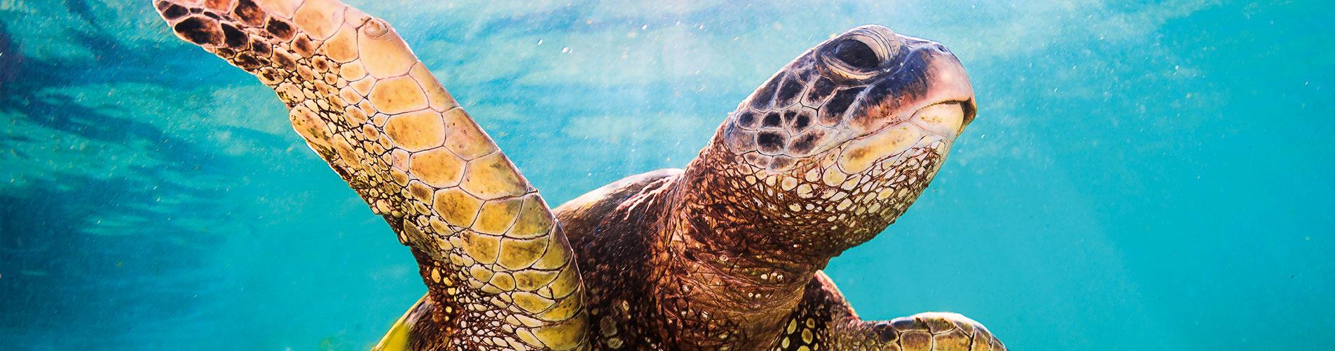 Scuba Diving Montego Bay - Slide