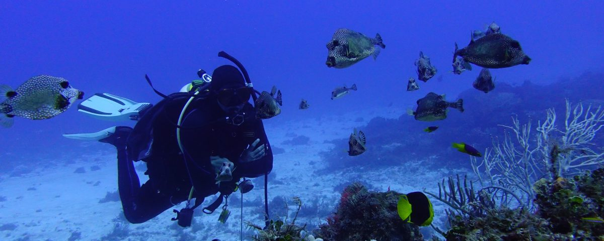 Learn to Dive in the Caribbean - Main picture