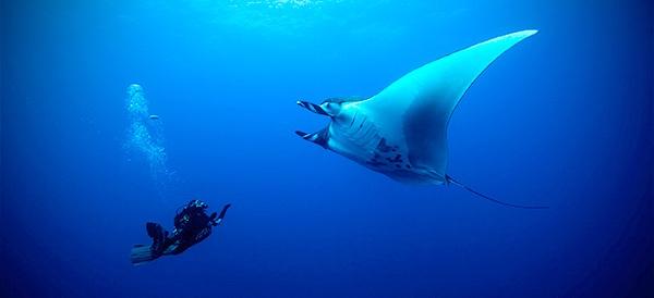 Liveaboard Dive Trip - Manta Ray