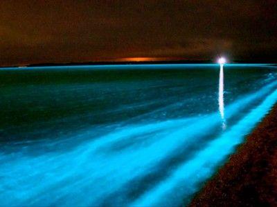 luminous lagoon tours