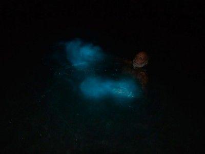 tour luminous lagoon