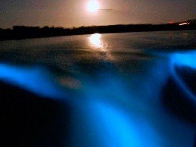 day trip luminous lagoon