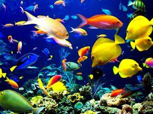 Maldives liveaboard diving - Colorful fish
