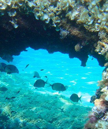 Mallorca Scuba Diving