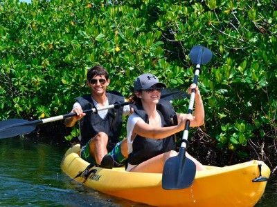 mangrove excursions