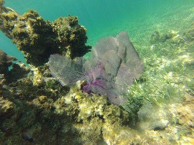 snorkel trips montego bay