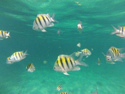 montego bay snorkeling shops
