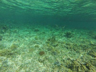 montego bay snorkeling centers