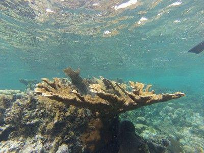 snorkeling shops montego bay