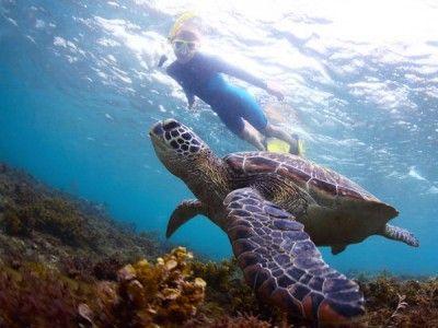 Montego bay marine park snorchelausflug