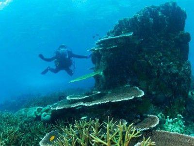 parco marino di montego bay subacqueo