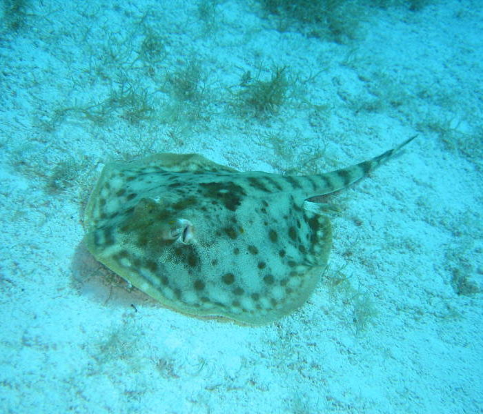 montego bay marine park excursion